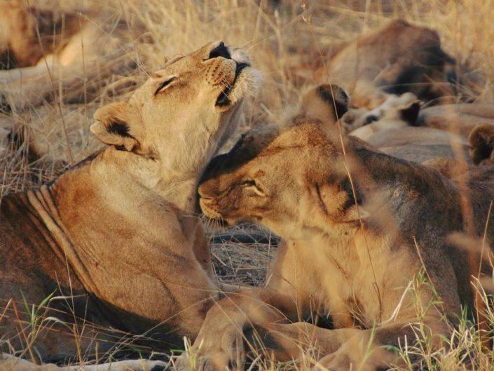 Tansania – Puls der afrikanischen Wildnis spüren