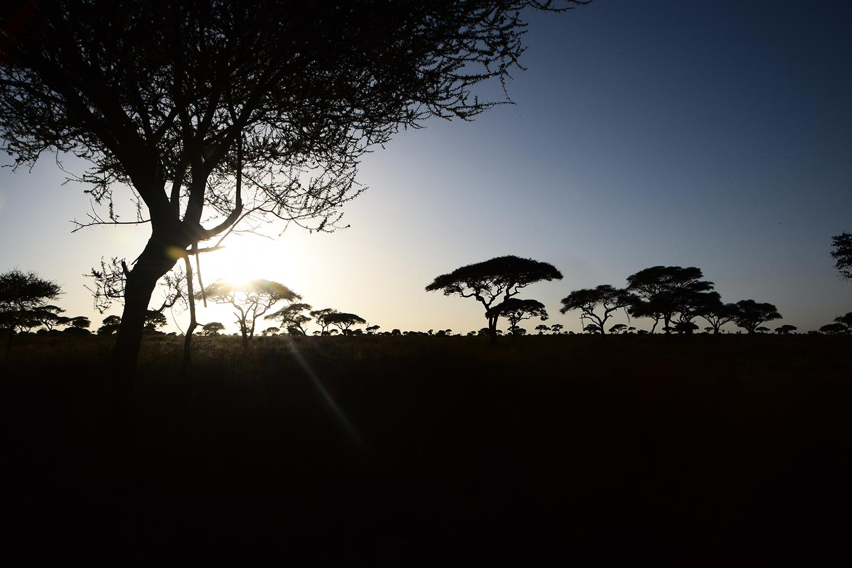 Reise in Tansania in Afrika. Savanne im Mahale Nationalpark kurz vor Sonnenuntergang.