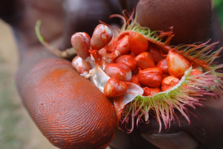 Reise in Sansibar in Afrika. Nahaufnahme einer exotsichen Frucht mit roten Kernen und grünen Stacheln.
