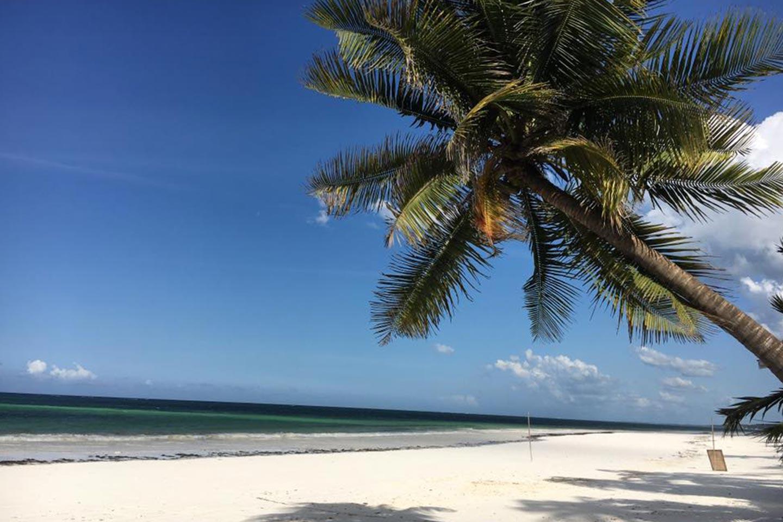 Reise in Sansibar in Afrika. Weisser, von Palmen gesäumter Sandstrand erstreckt sich unter blauem Himmel.