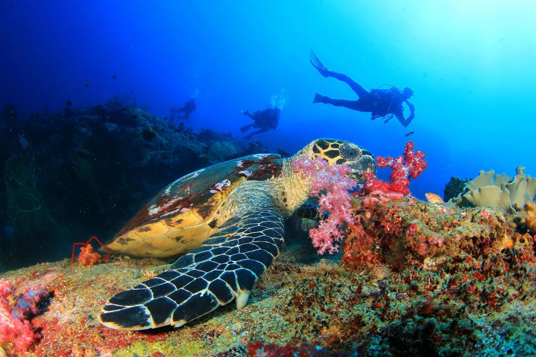 Reise in Sansibar in Afrika. Bild von Tauchgang, in buntem Korallenriff schwimmt eine grosse Meeresschildkröte, weit im Hintergrund sind drei beobachtende Taucher zu erkennen.