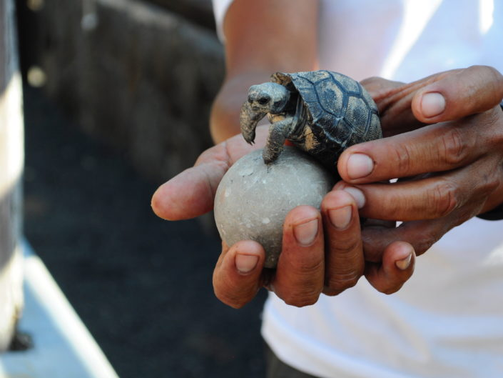 Ecuador / Galapagos - Tiere und Natur bestaunen