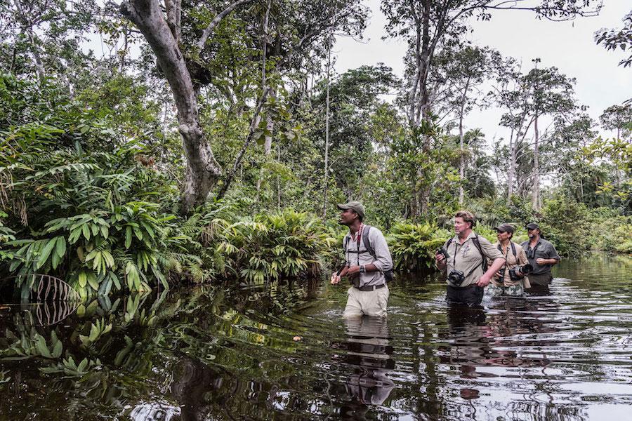 Reise im Kongo in Afrika. Auf Safari watet eine Gruppe Touristen mit dem Ranger durch den Kongo Fluss und beobachten ein Tier im dichten Gebüsch.