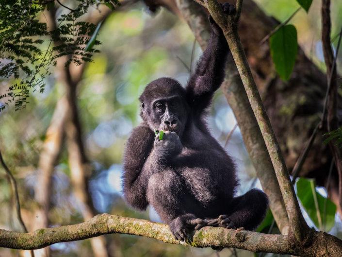 Kongo – ein Abenteuer im Herzen Afrikas