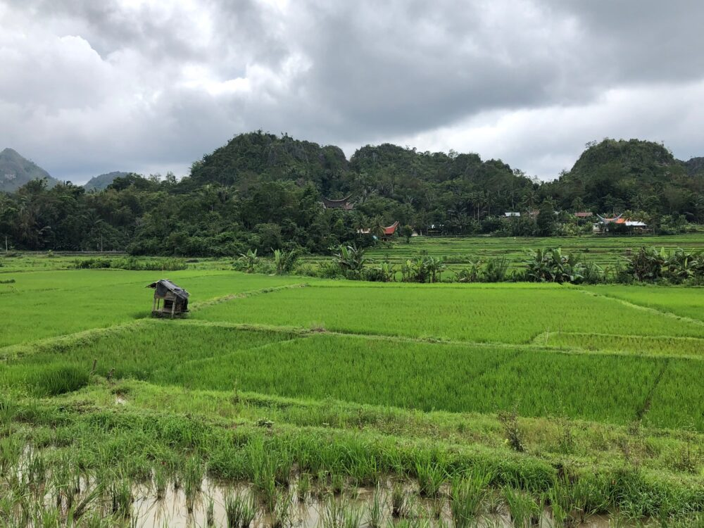 Reise in West Papua in Indonesien. Reisfelder dehnen sich aus, in der Ferne ist ein Dorf vor einigen Hügeln zu erkennen.