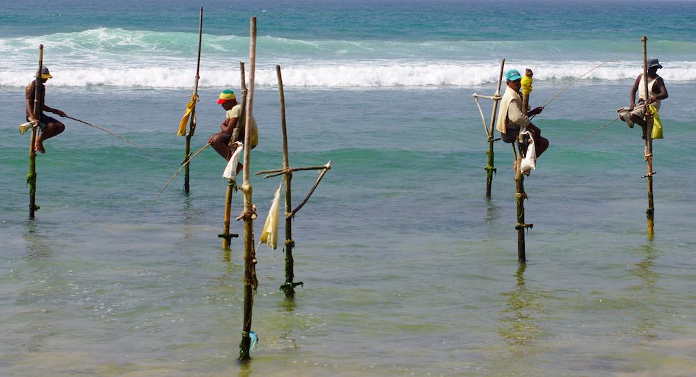 Reise in Sri Lanka in Asien. In Negombo sitzen einheimische Fischer auf langen Holzsstangen im Meer.