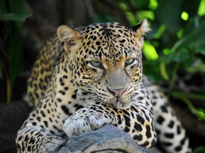 Sri Lanka – erfrischend vielfältig!