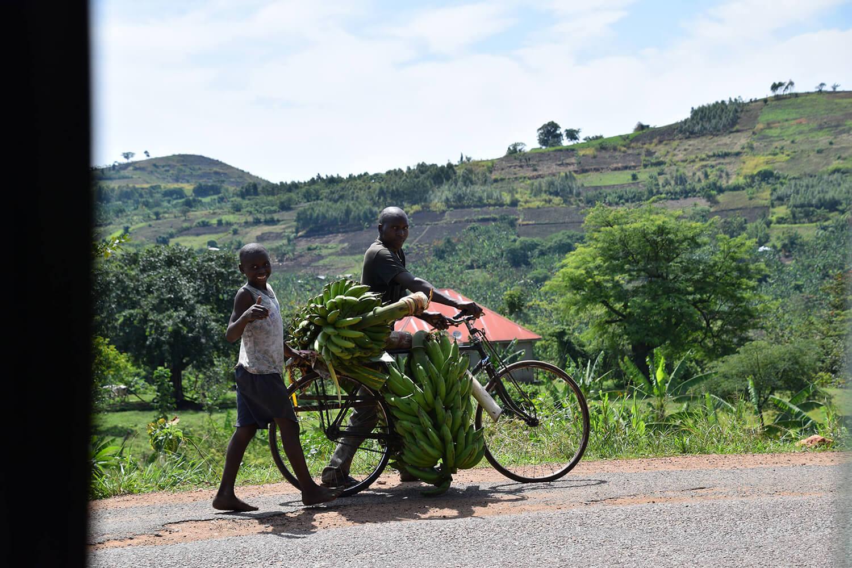 Reise in Uganda in Afrika. In einem Dorf in Norduganda, auf dem Weg zum Murchison Falls Nationalpark, schiebt ein einheimischer Mann ein Fahrrad, das mit vielen grünen Bananen beladen ist. Hinter ihm läuft sein junger Sohn, der den Daumen hochhebt, beide schauen in die Kamera.