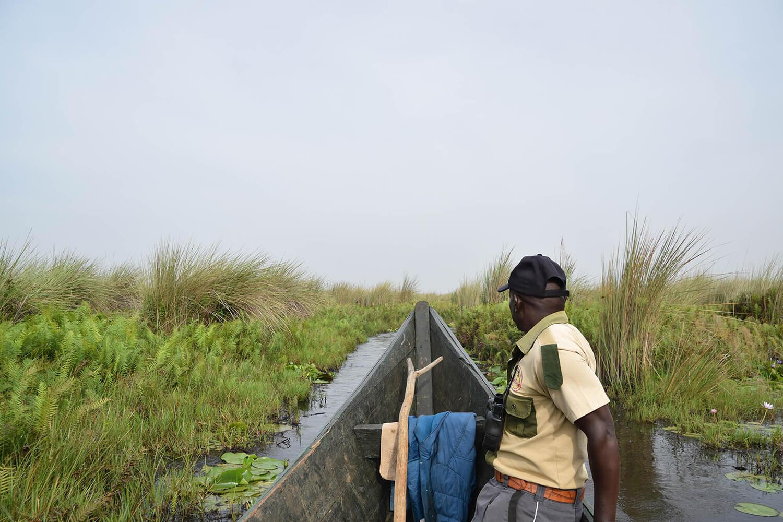 Reise in Uganda in Afrika. Ein einheimischer Reiseführer von Nkuringo Safari sitzt bei einer Bootsafari in einem traditionellen Langboot und fährt mit seiner Gruppe durch den Mabamba Sumpf.