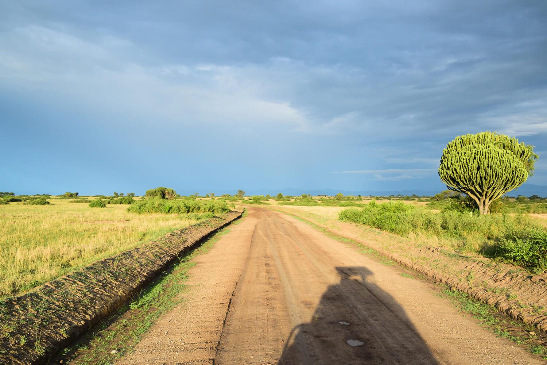 Reise in Uganda in Afrika. Safari in Queen Elizabeth Nationalpark, Aussicht auf weite Steppenebene mit vereinzelten Sträuchern und Bäumen, die Abendsonne wirft lange Schatten.