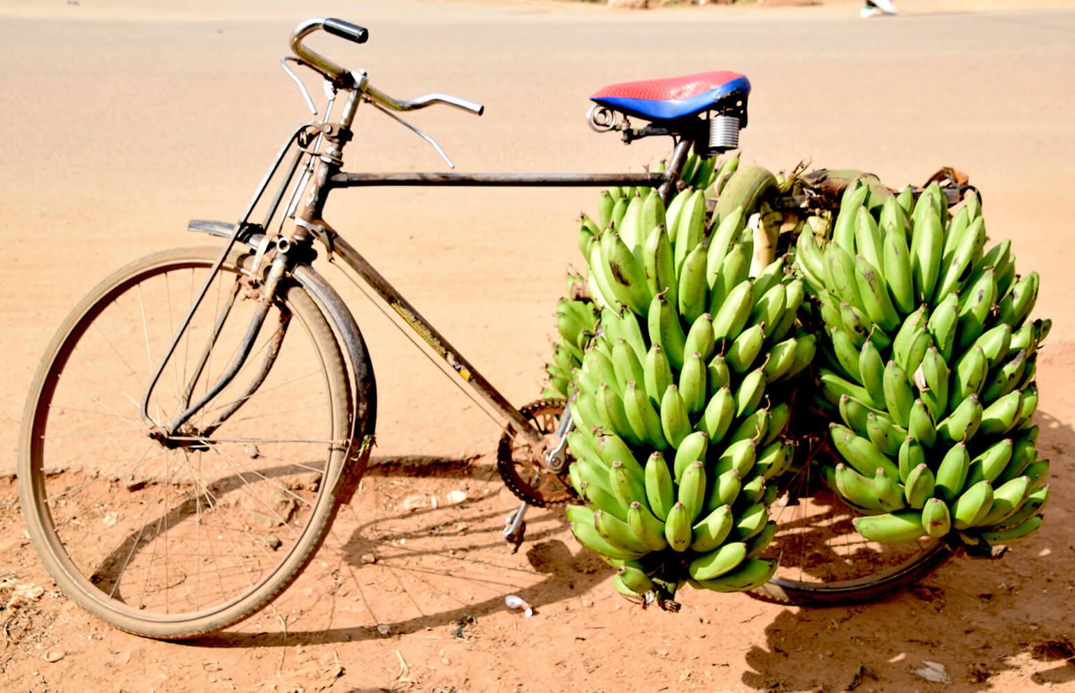 Reise in Uganda in Afrika. Ein verrostetes, mit Bananen beladenes Fahrrad steht auf der staubigen Strasse.