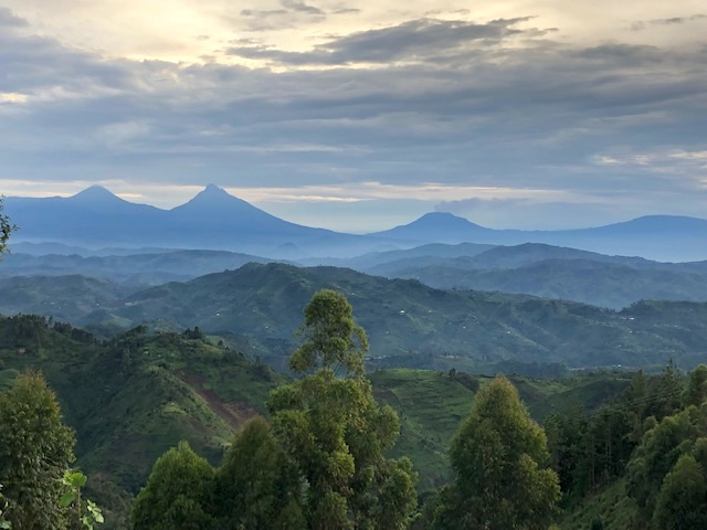 Reise in Uganda in Afrika. Auf einer Wanderung im hügeligen Urwald sieht man aus der Ferne die Bergkette der Virunga Vulkane.