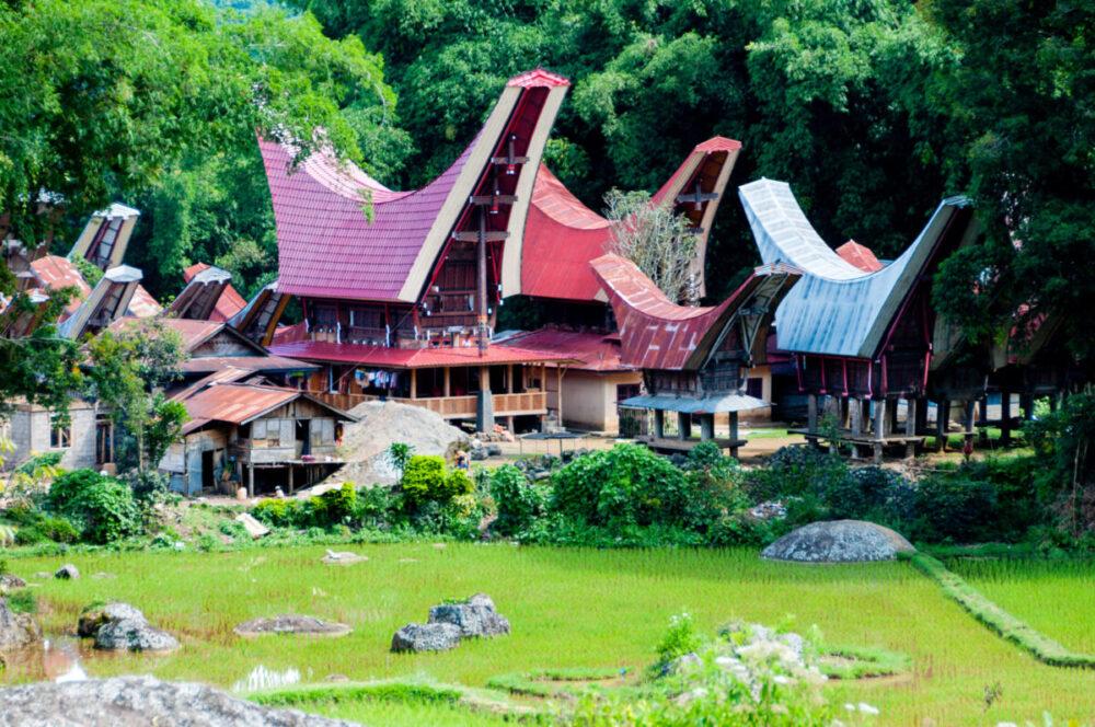 Reise in Sulawesi in Indonesien. Ein Dorf mit traditionellen Häusern im Urwald, davor liegt ein Reisfeld.