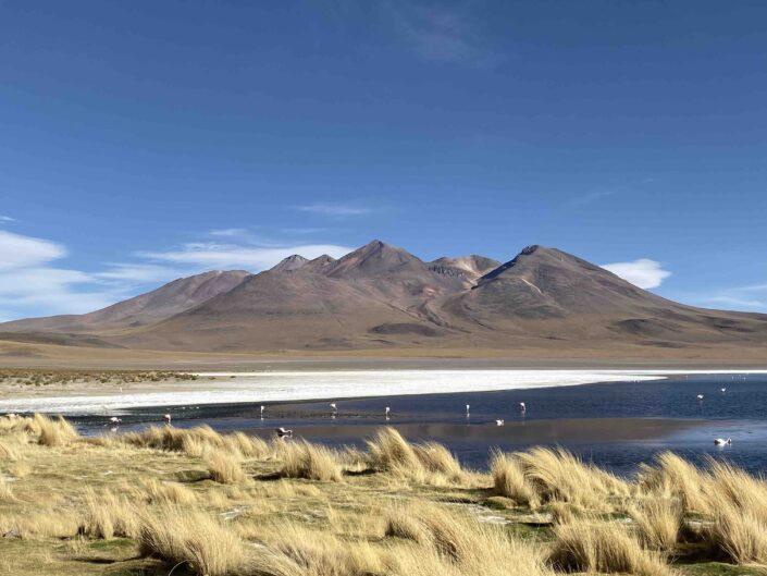 Reise in Bolivien in Südamerika. Die Laguna Colorada prägt das Hochland Altiplano, Flamingos tummeln sich darin, im Hintergrund ragen die Anden empor.