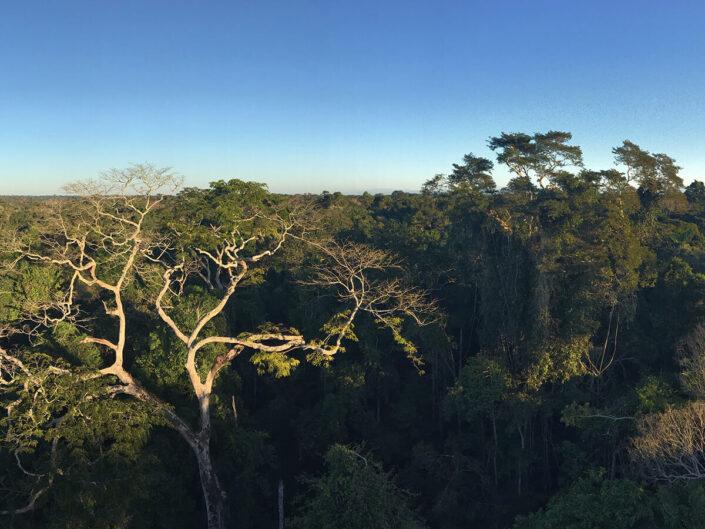 Reise in Peru in Südamerika. Die grossen Baumkronen des Amazonas Regenwaldes im Tambopata Naturreservat werden von der Morgensonne beleuchtet.