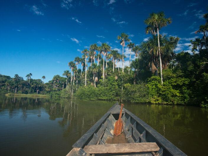 Reise in Peru in Südamerika. Blick von einem Kanu aus auf den Fluss und das von hohen Palmen bewaldete Ufer des Tambopata Naturreservats. An der Spitze des Kanus liegt ein kleines Holzruder.