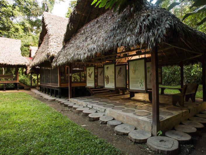Reise in Peru in Südamerika. Mit Stroh bedeckte Hütten stehen mitten im Wald, darin sind grosse Tafeln aufgehängt, die Besuchern Informationen zu den Lebewesen im Tambopata Naturreservat bieten.