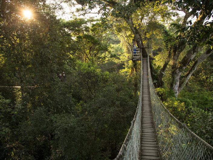 Reise in Peru in Südamerika. Sicht vom Inkaterra Canopy Walkway auf die hölzerne Hängebrücke und das Baumdickicht des Amazonas Regenwaldes im Tambopato Naturreservat.