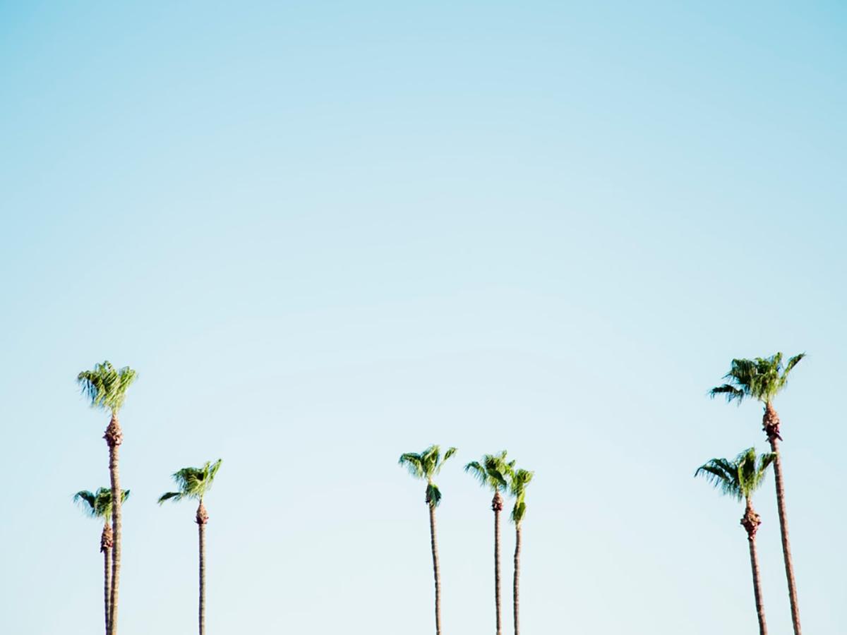 Hohe Palmen zeichnen sich vor dem blauen Himmel ab.