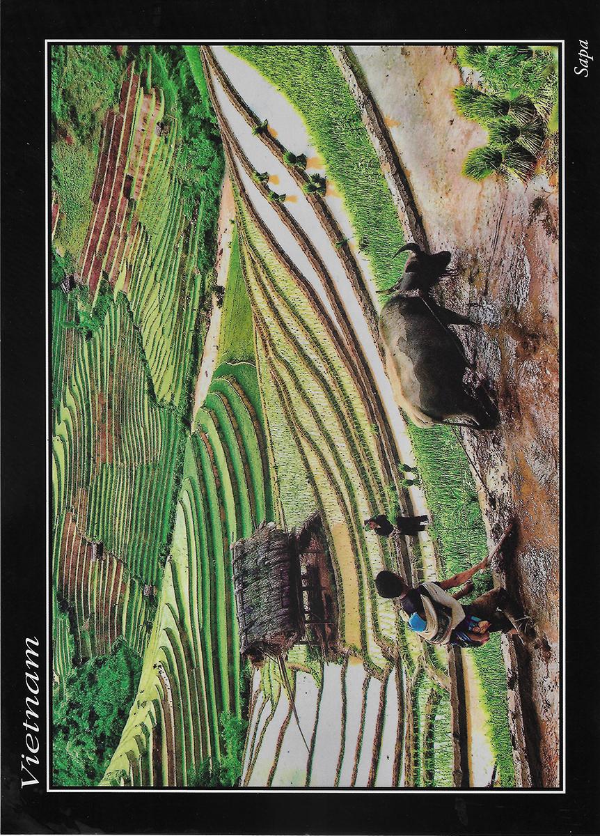 Postkarte von einer Südostasienreise von zufriedenen Simtis Kunden. Abgebildet sind Reisterrasse in Vientam, die von einheimischen Baumern und einem angespannten Ochsen bearbeitet werden.