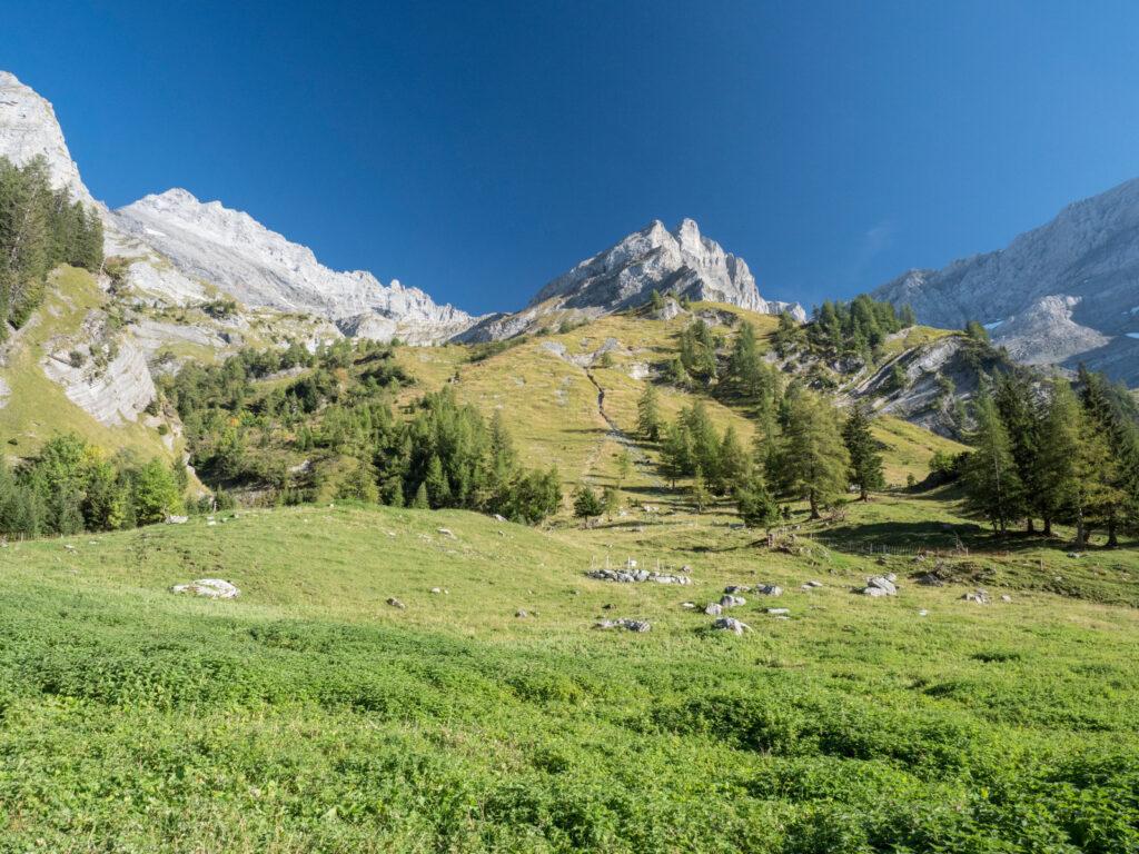 Reise in der Schweiz in Europa. Landschaftsbild von den Waadtländer Alpen, die sich majestätisch über Bergwiesen und kleine Tannenwälder erheben.
