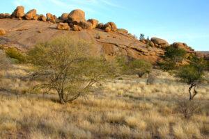 Savannenlandschaft mit Bäumen, Sträuchern und grossen Steinen