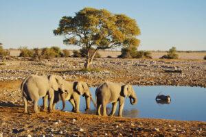 Elefanten und eine Antilope an einem Wasserloch vor karger Landschaft
