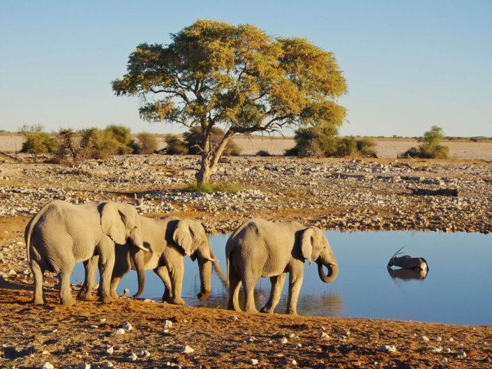 Südliches Afrika – Grosse Selbstfahrertour