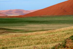 Weite Grasfläche vor roter Düne