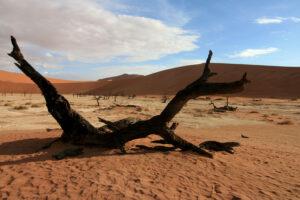 Toter Ast vor eindrucksvollen roten Dünen