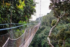 Canopy Walk in den Baumkronen des Regenwalds