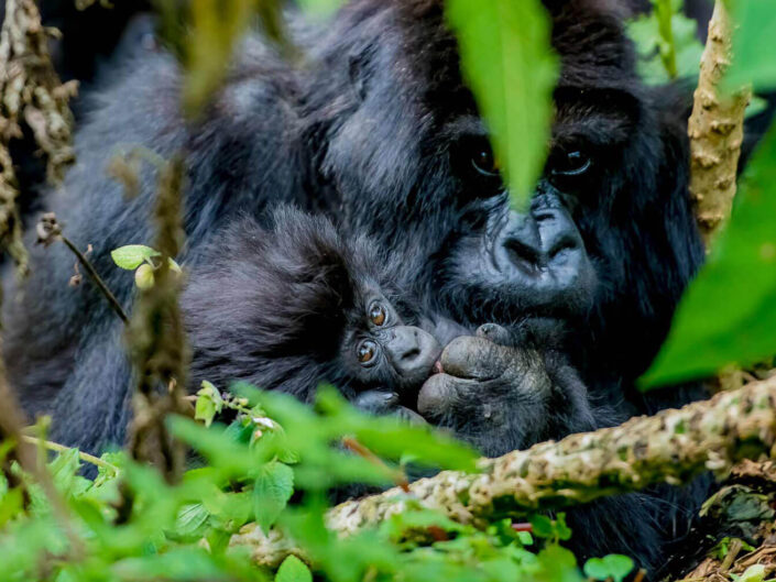 Ruanda – das Land der tausend Hügel