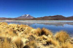 Laguna mit Flamingos zwischen Steppengras und Bergen