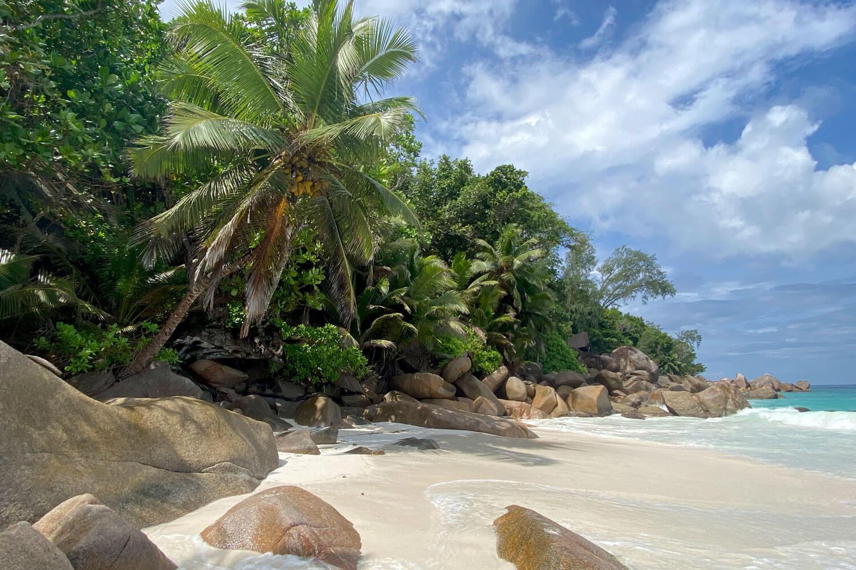 Meer, Strand, Palmen und typische Granitfelsen auf den Seychellen