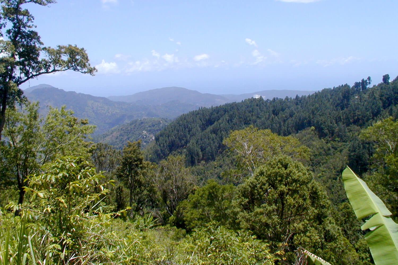 Blick auf grüne Hügel in Jamaika