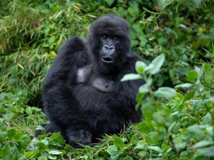 Ruanda, Uganda & Kongo – Abenteuerreise in kleiner Gruppe über Weihnachten 2021